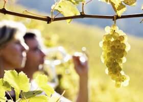 Experts logiciels viticoles
