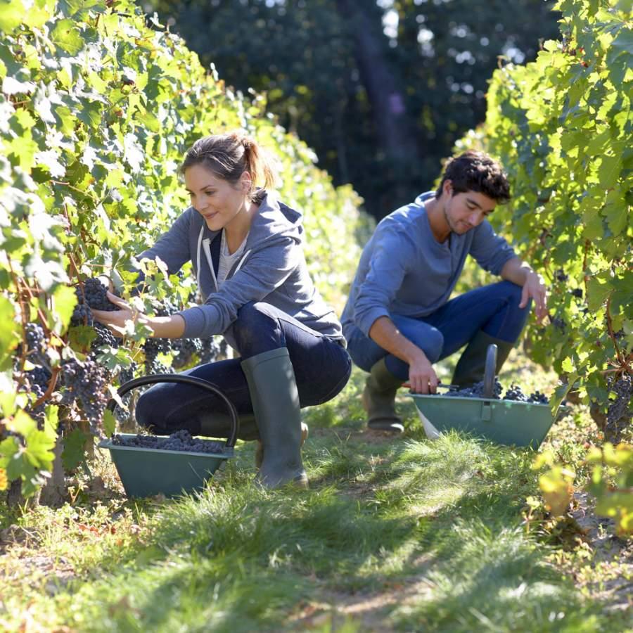 Veille technologique logiciels viticole